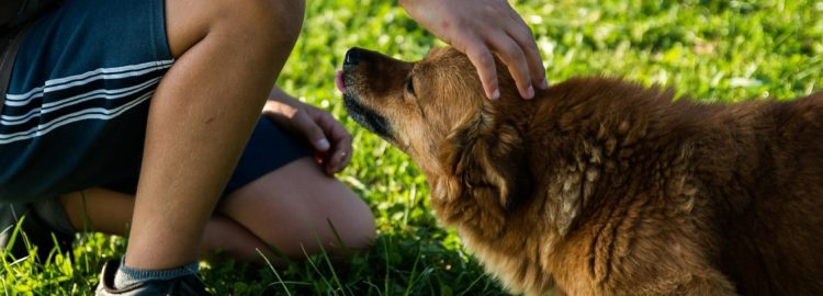 Preventing Dog Disasters