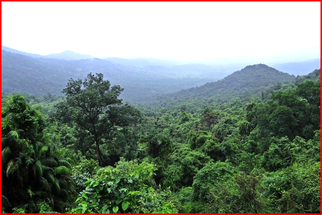 AutoInformed.com on CARB Tropical Forest Standards