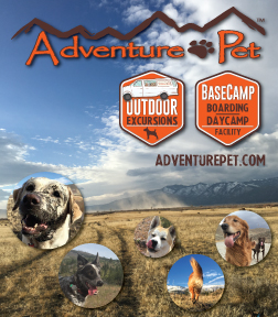 adventure-pet