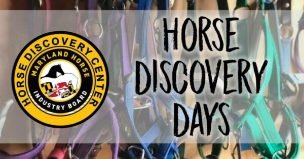 Horse Discovery Days at Graham Equestrian Center