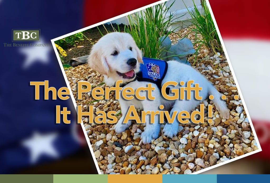 Valor Service Dog Ranger