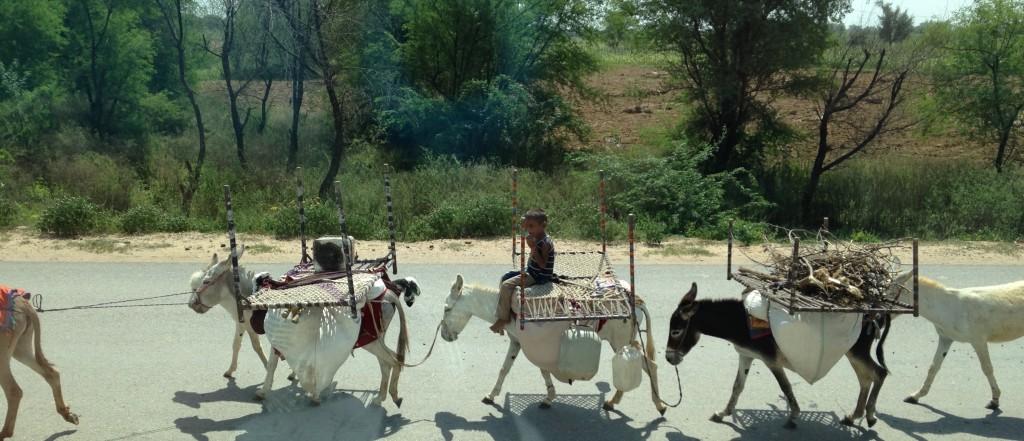 India donkeys