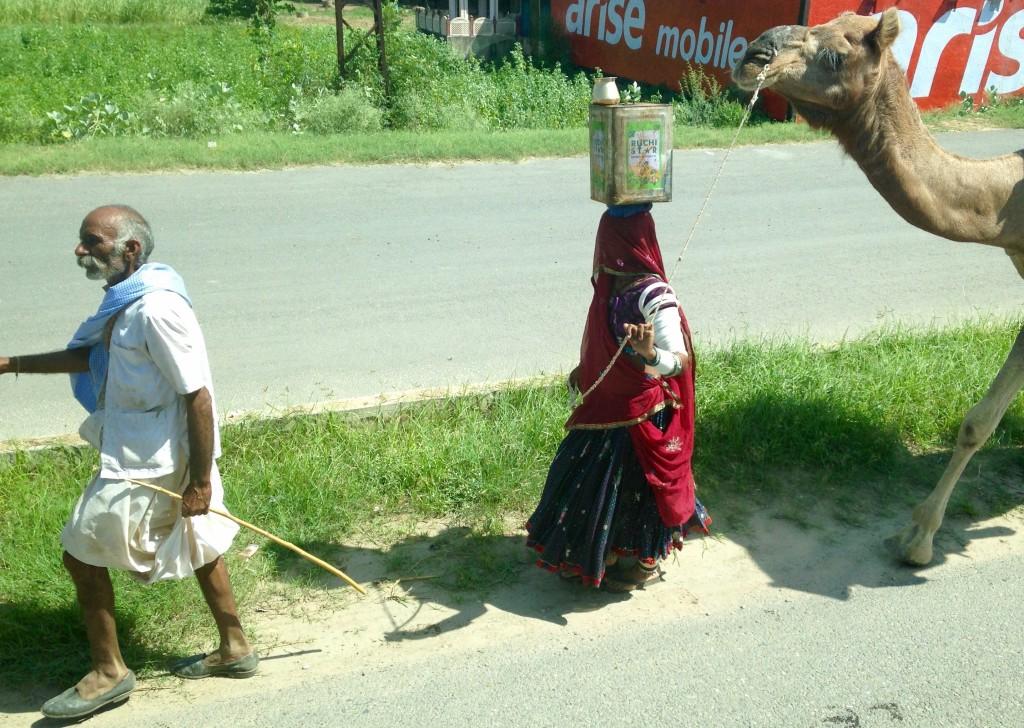 Gypsy girl leading camel