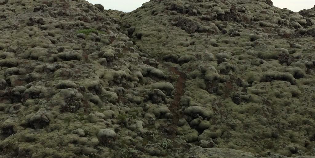 Foamy lichen