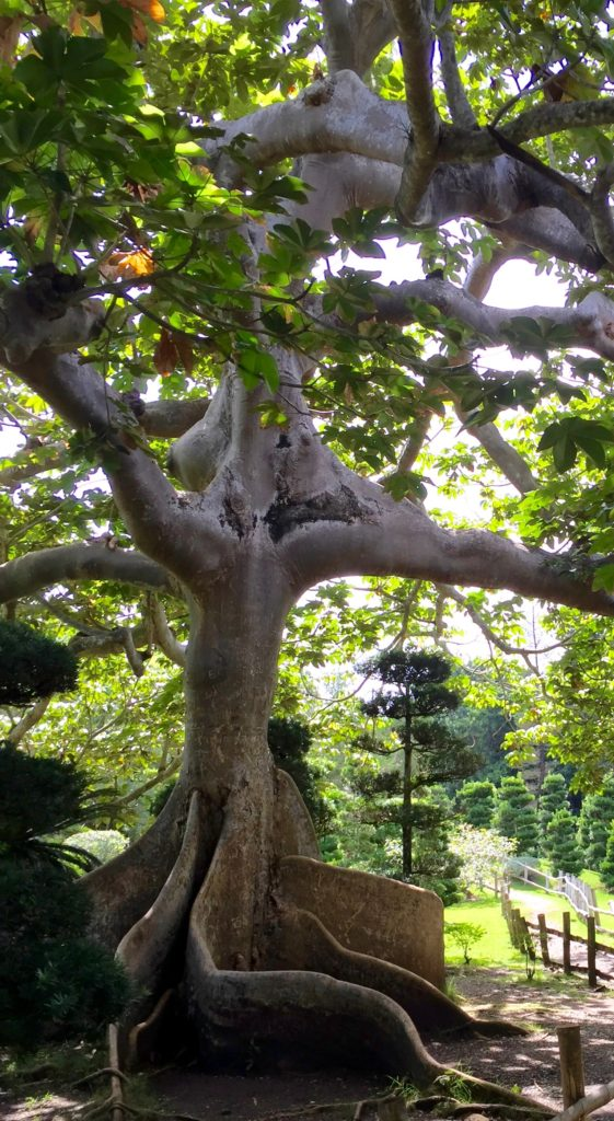 Japanese Garden tree trunk