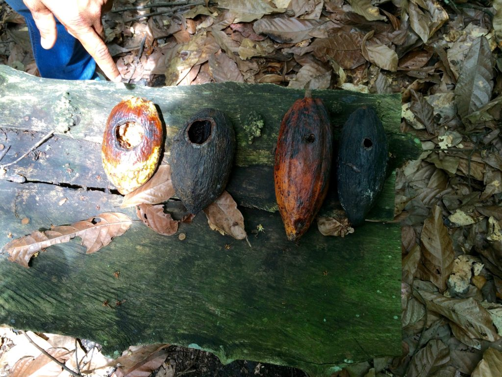 Big holes = rodents; little holes = woodpeckers