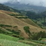 Constanza farmlands