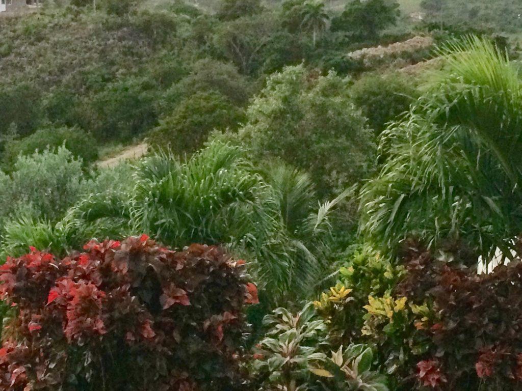 El Monte Azul foliage