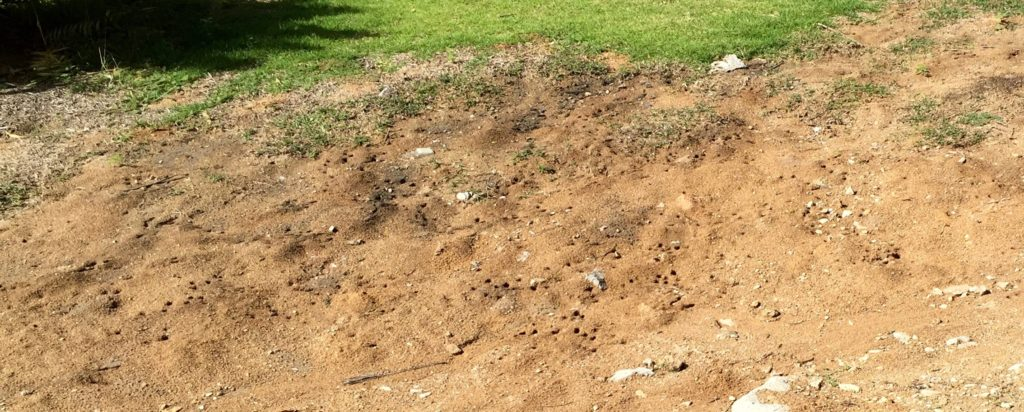 Ground wasps?
