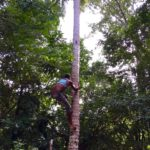 Shinny up a coconut palm 2