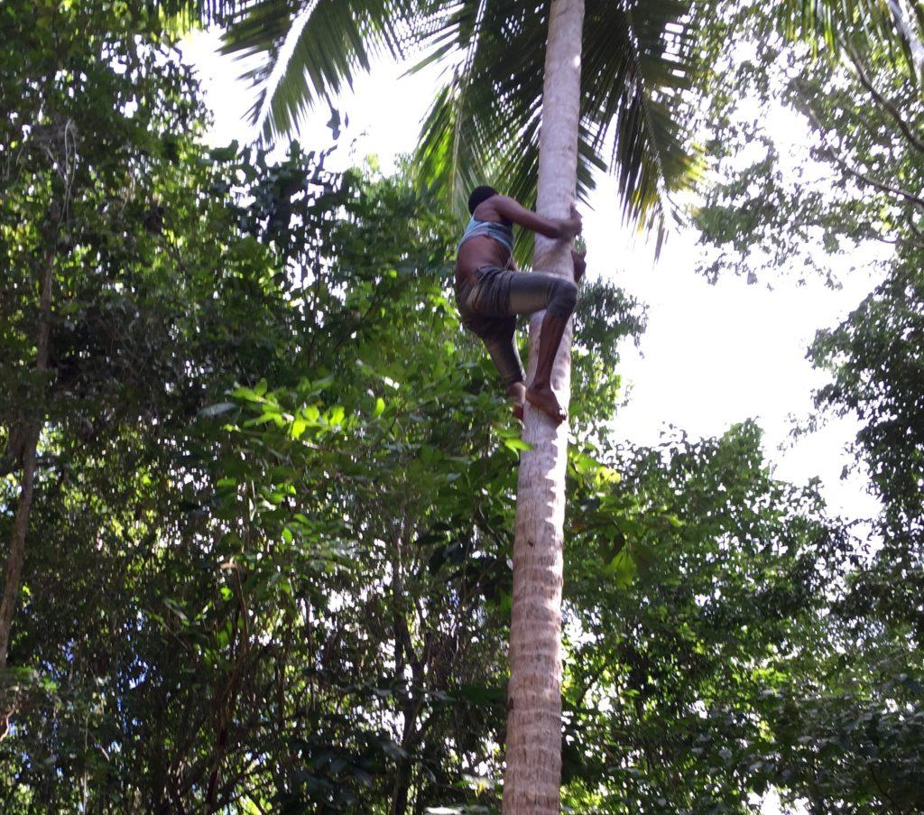 Shinny up a coconut palm 4