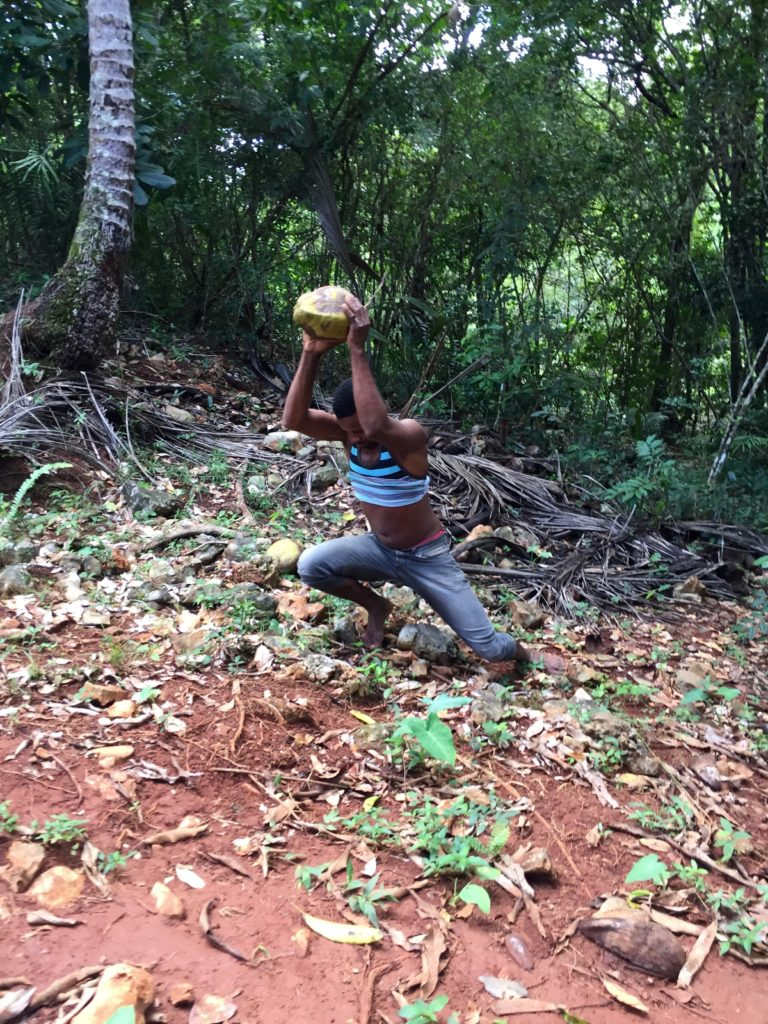 Taking off the outer coconut husk