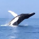 Humpback breech - square