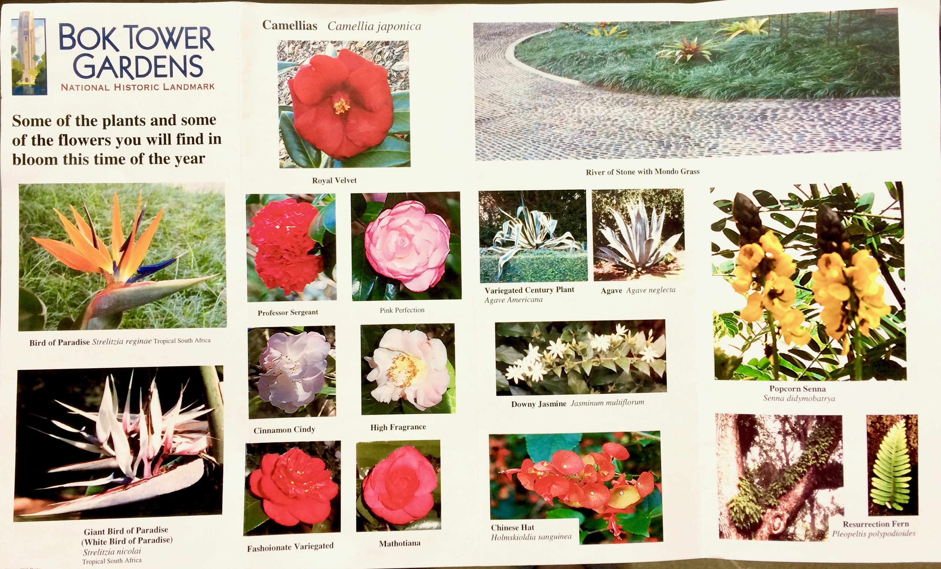 Plants & Flowers this time of year p 1
