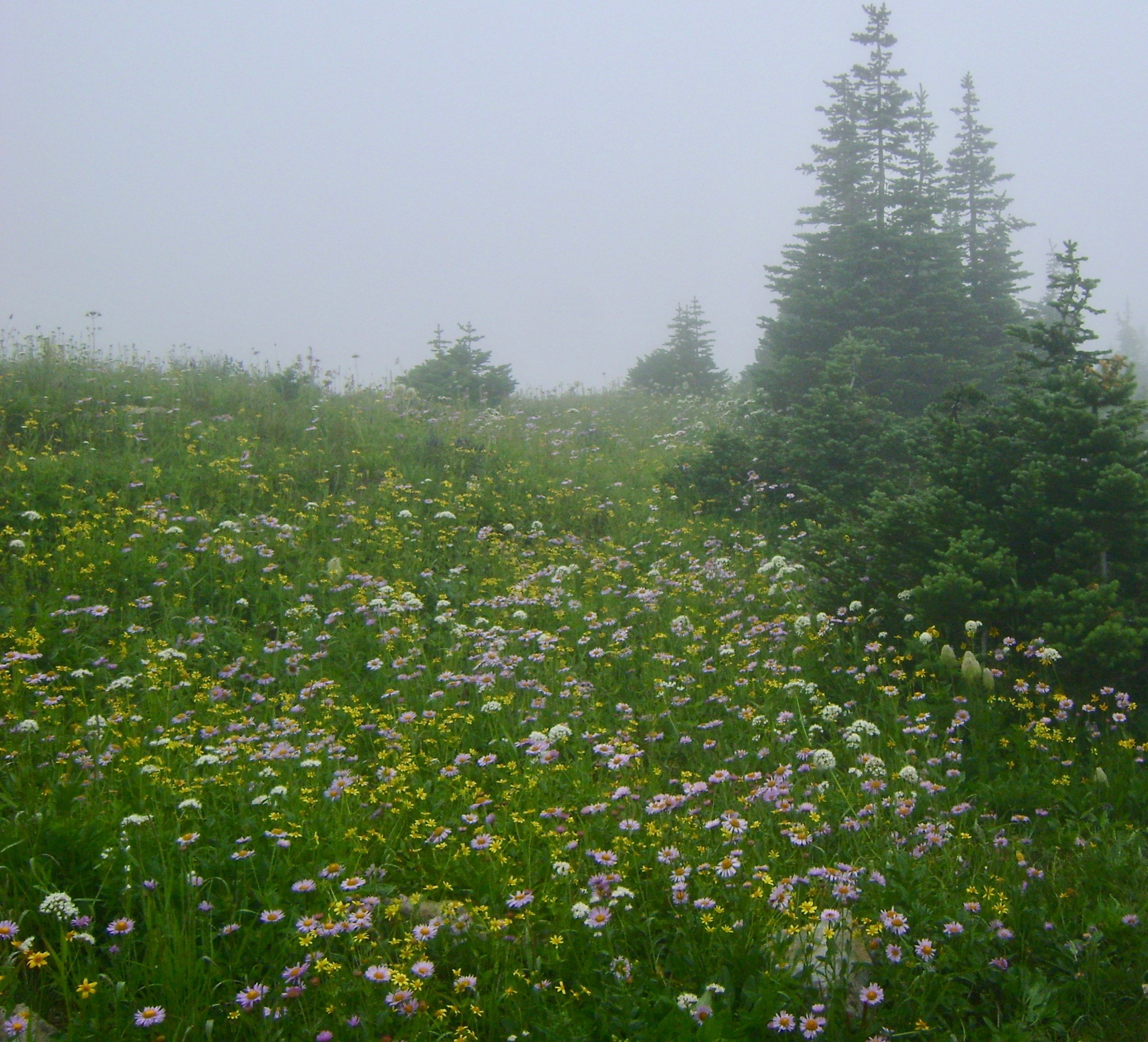 Misty day at the top of Highline Loop