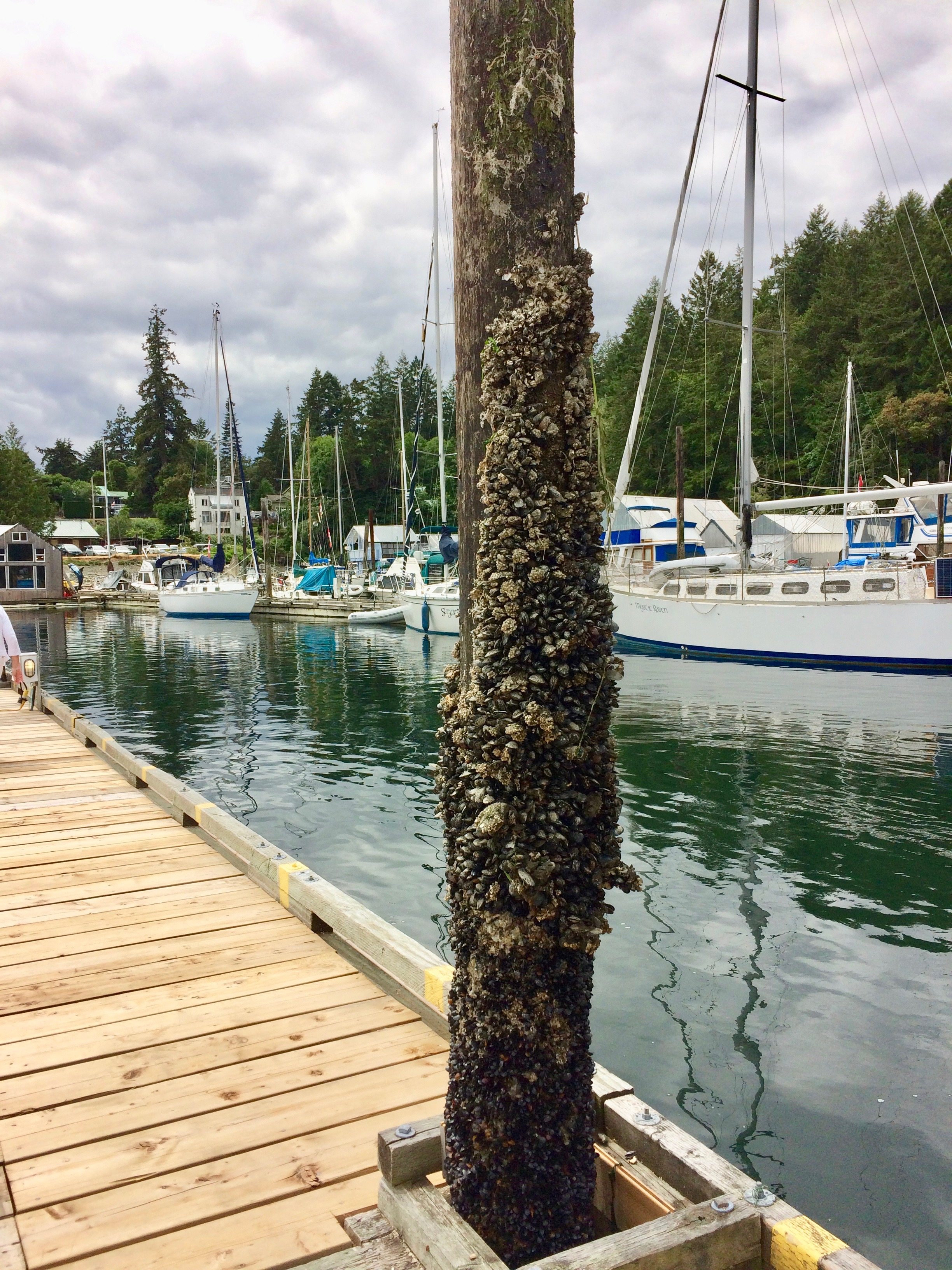 Barnacles indicate water line