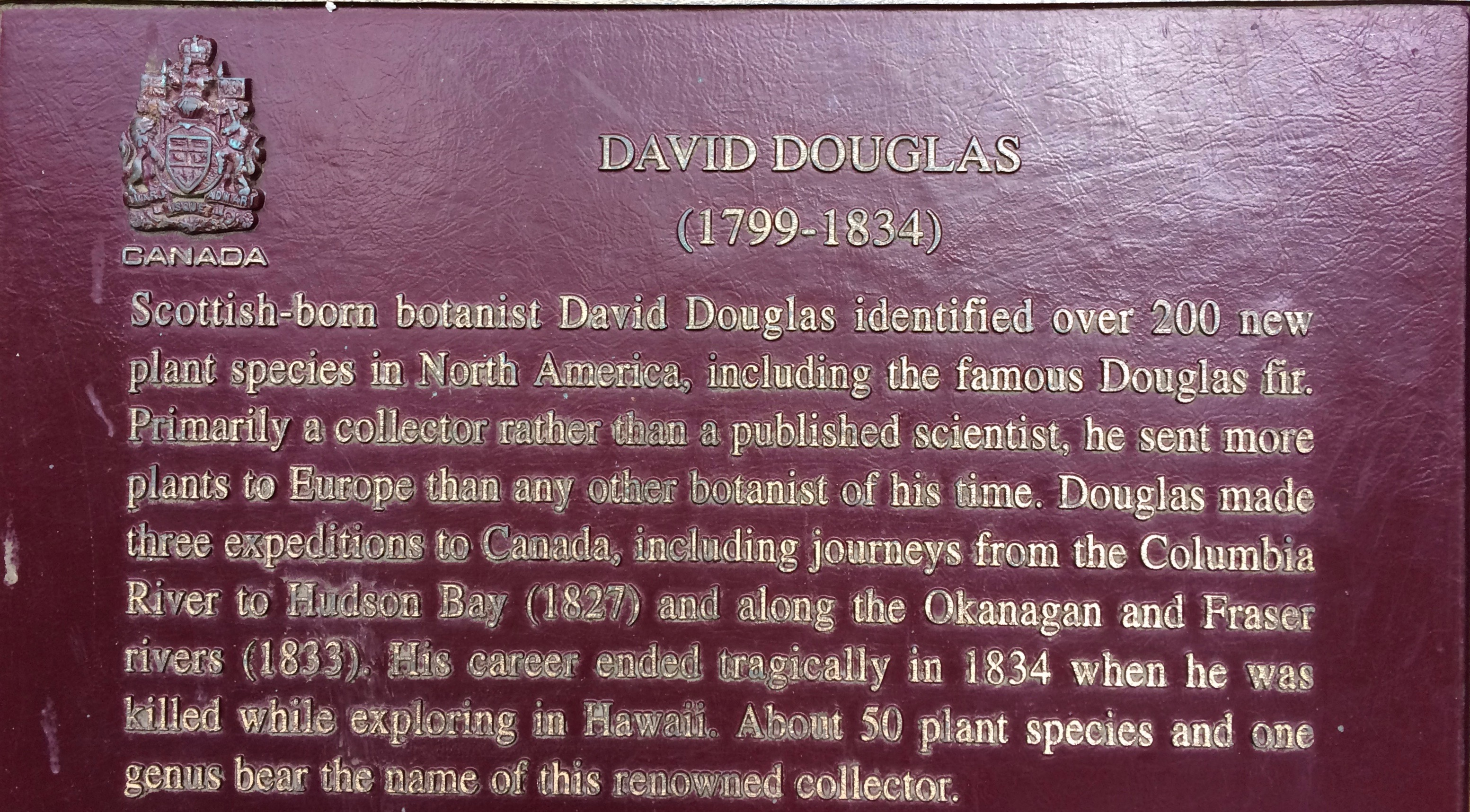 Name origin of the Douglas Fir