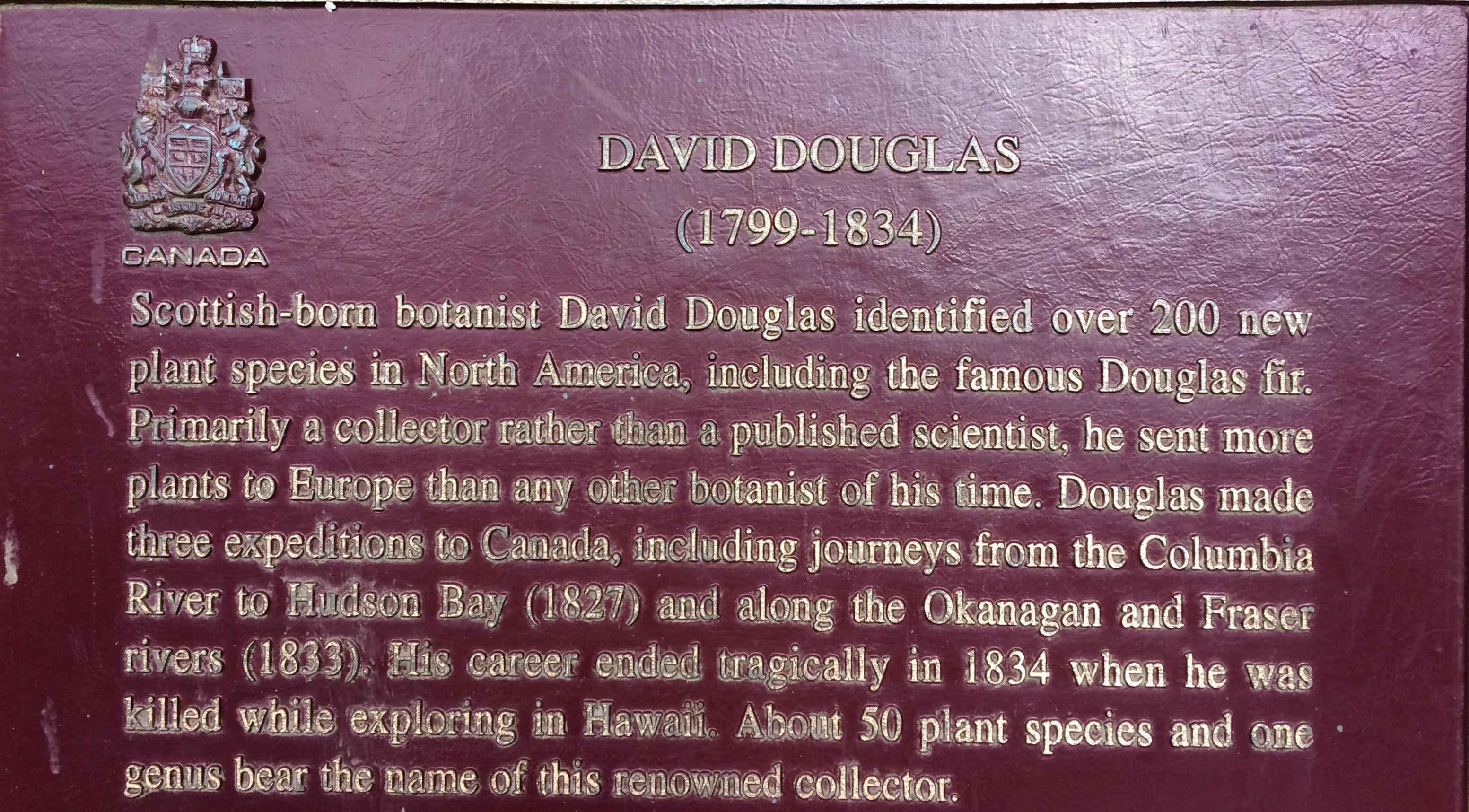 Name origin of the Douglas Fir