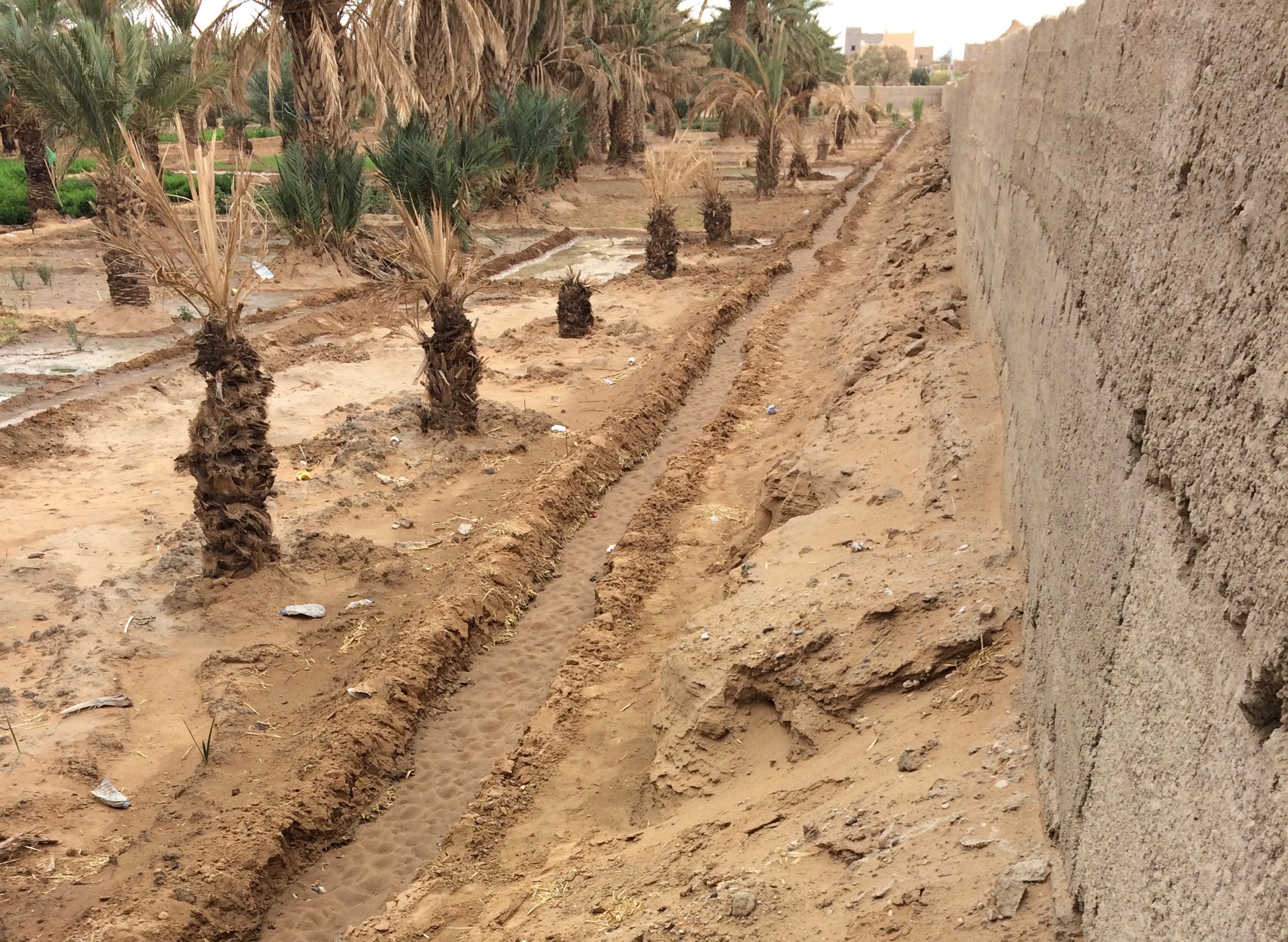 Wall to protect oasis from encroaching sand dunes