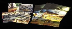 HLS-TFC-Gift-Cards