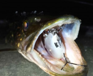 Rapala Clackin Rap Northern Pike Resized for Web