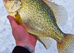 Crappie through the Ice Guelph Lake AAA