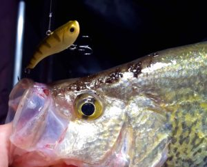 Guelph Lake Crappie Storm Ice Jig AAA