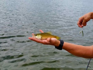 Mark proves that Yamamoto Senkso have no size restrictions on Pike Lake.