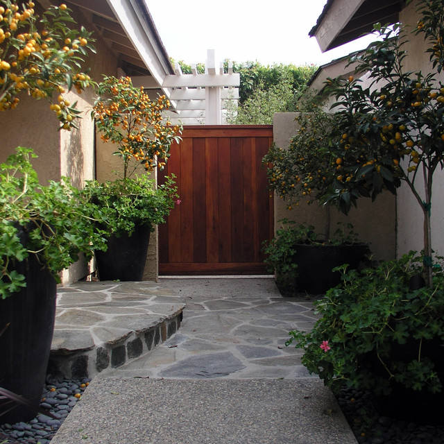 asian-entry-when-plant-citrus-trees-potted-patio-indoor-fruit-plants-container-eaves
