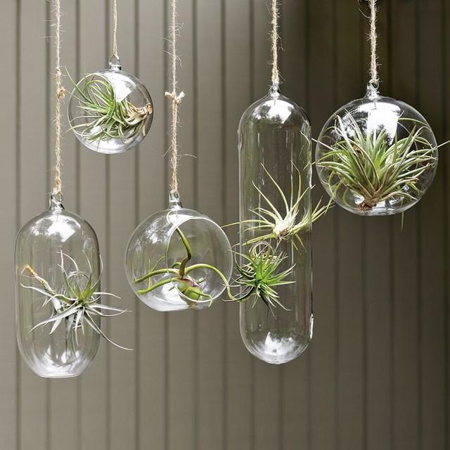 492_7_hanging-wall-planters-indoor-large-door-amazing-architectures-planters