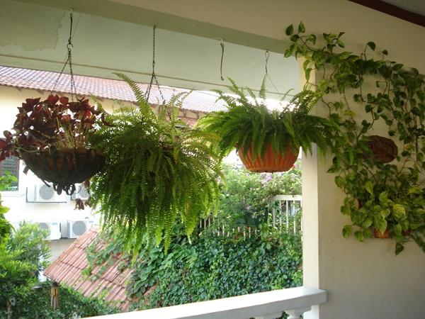 Hanging-Plants-Design-Ideas