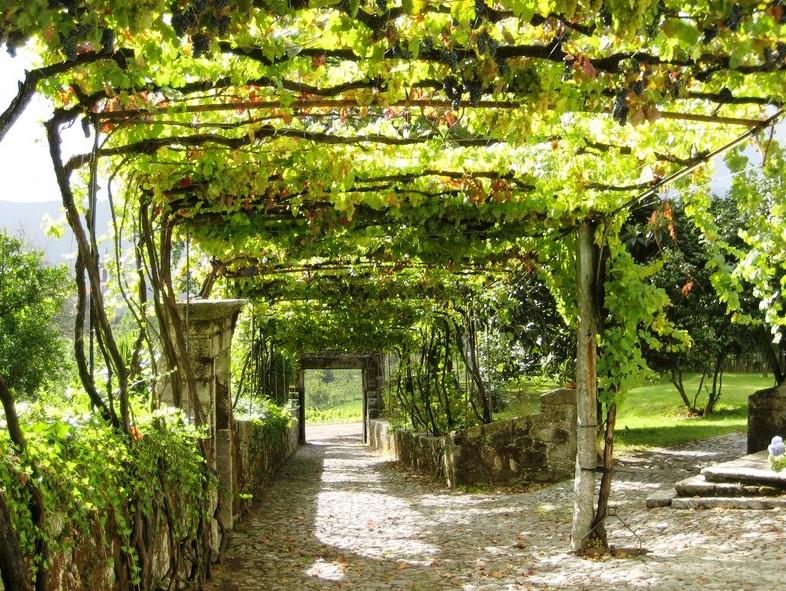 grape-arbor-park