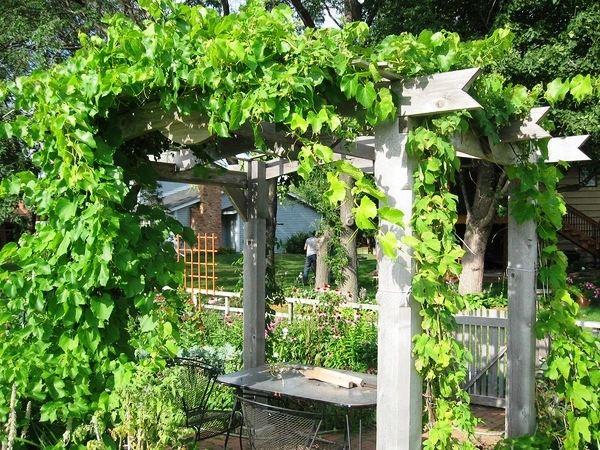 wooden-arbor-with-vines-backyard-escape-ideas-outdoor-furniture