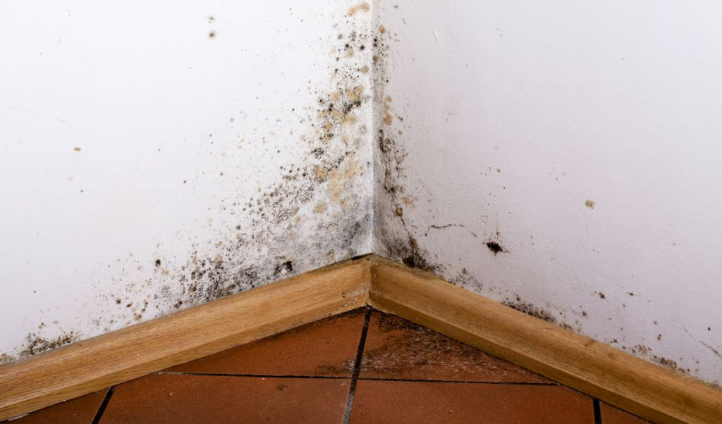 Keep Your Home Mold-Free