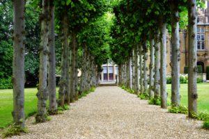 3 Benefits of Tree Trimming Regularly