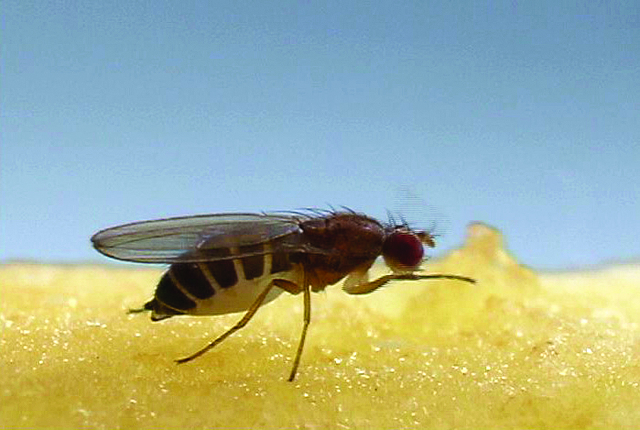 Dissipate the fruit flies