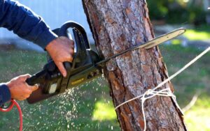 Why Should Hire A Professional Tree Removal Services