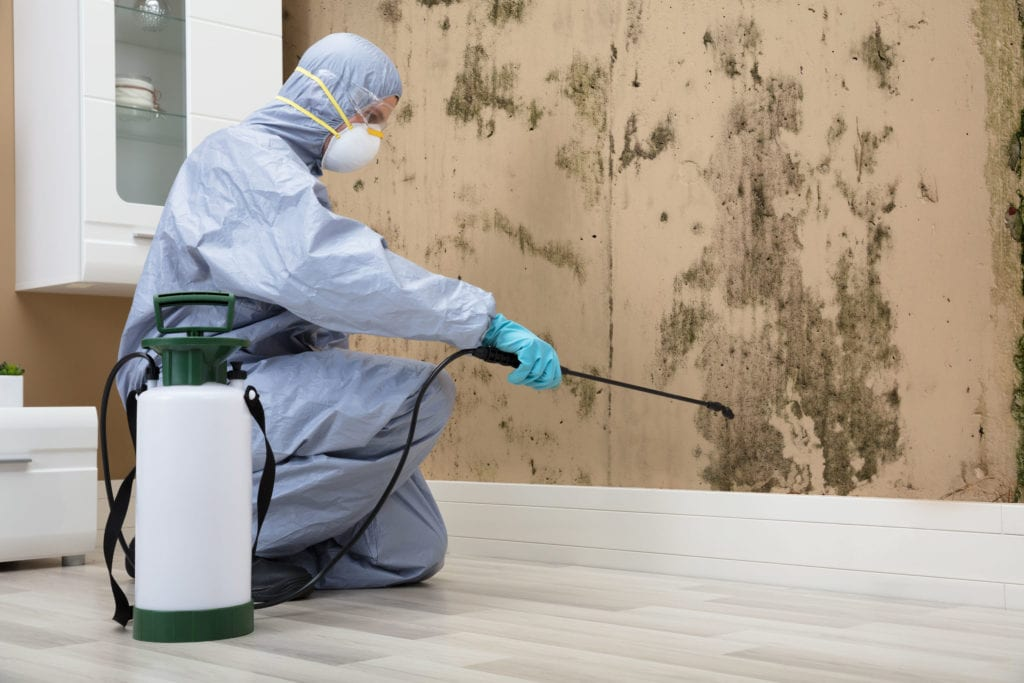 Some States Require Mold Removal Companies to Carry a Specific License