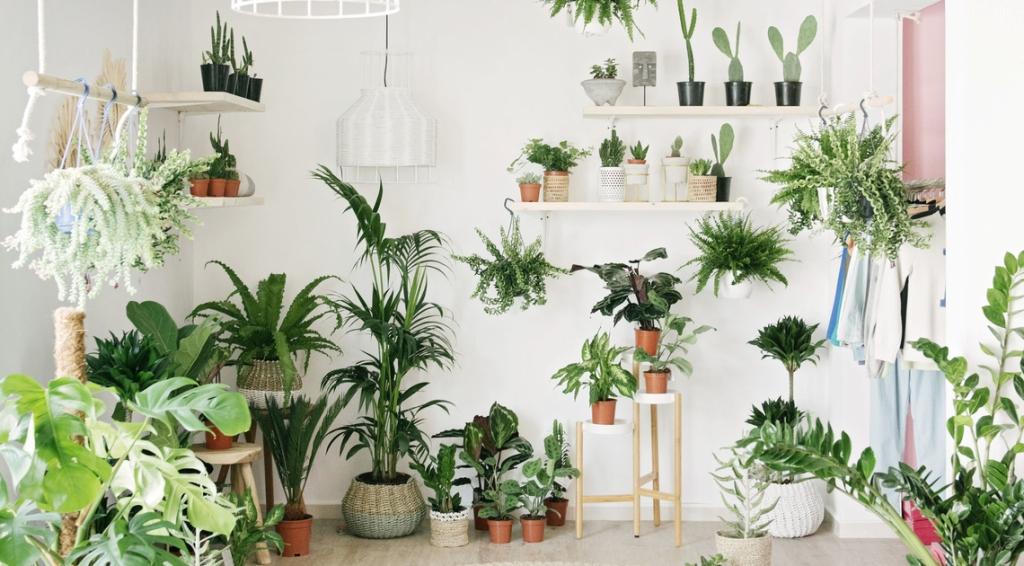 Buy Plants