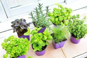 7 Garden Herbs That Relieve Indigestion Naturally