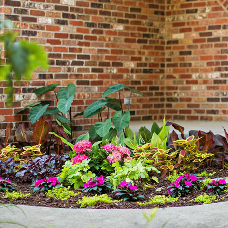 Colourful Plants For Shady Corners
