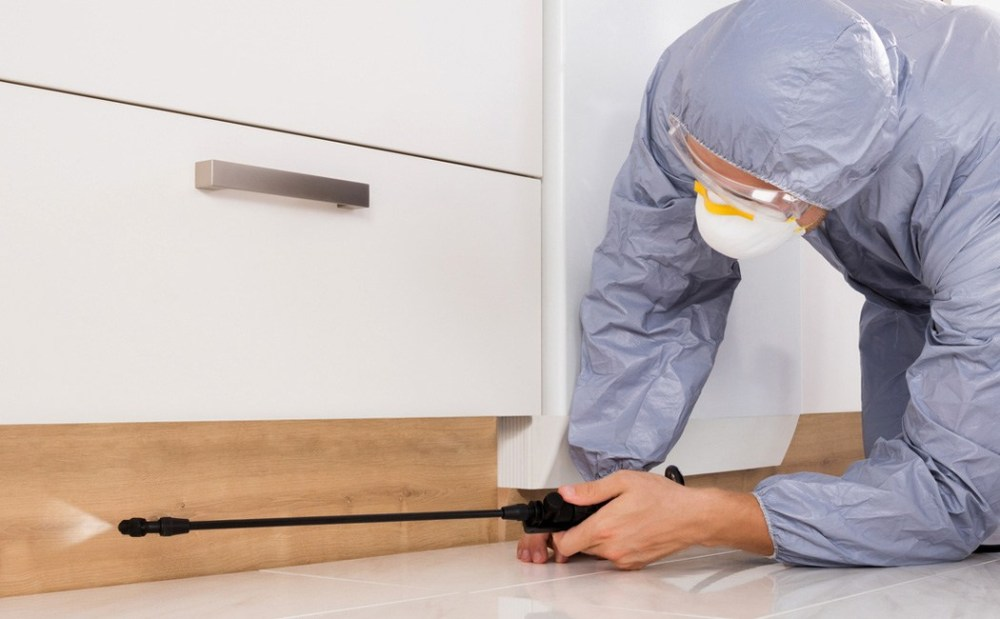 Image result for Reasons to Hire an Exterminator
