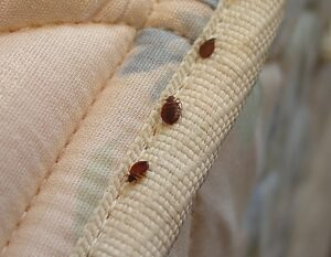 Tips on Keeping The Bed Bugs From Coming Home With You