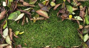 Top Lawn Care Tips You Need To Know During Fall