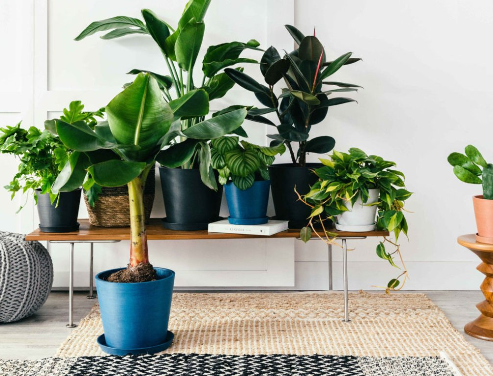 Mixing And Matching Plants That Grow Well Together