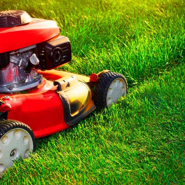 Mow the Lawn1