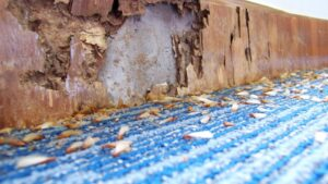 How to Spot a Termite Infestation in Your Home