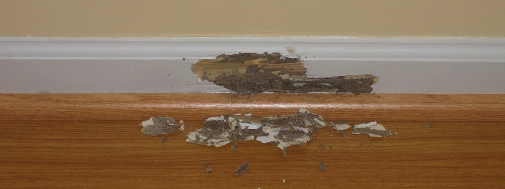 What to do if you have a termite problem