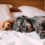 Tips for Getting Rid of Pet Hair