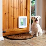 Pet Door Shopping Guide
